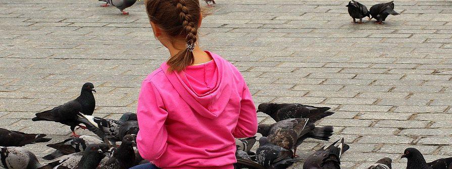 Control de palomas en Madrid