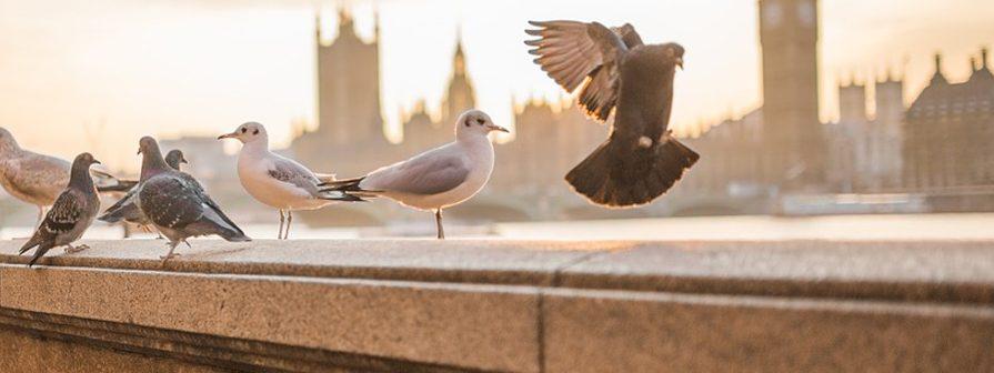 Mantener alejadas a la aves