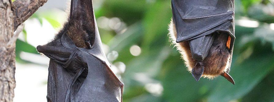 Control de murciélagos