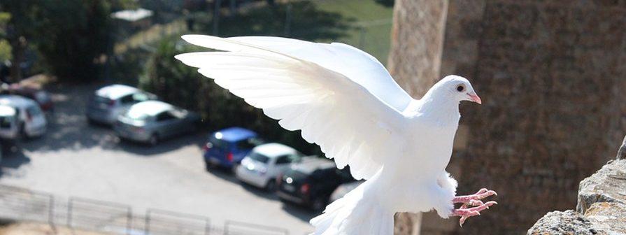 Control de palomas y sus excrementos