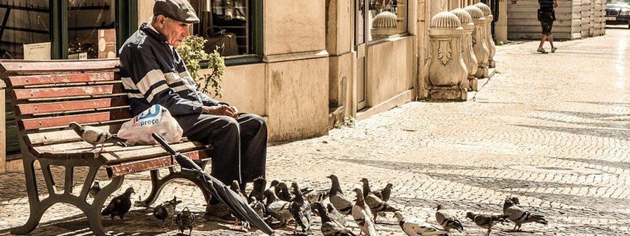 Control de palomas Toledo